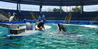 Delfinmosoly – Tények & tévhitek a delfináriumok világáról