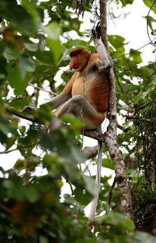 Borneo Bilit Forest Lodge búvártúra sipadan malajzia luxus nyaralás élővilág