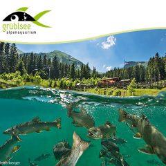Titán Grüblsee – Alpesi akvárium – Búvártúra, Ausztriában – Aug 7.