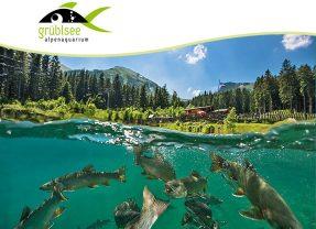 Titán Grüblsee – Alpesi akvárium – Búvártúra, Ausztriában – Július 21.