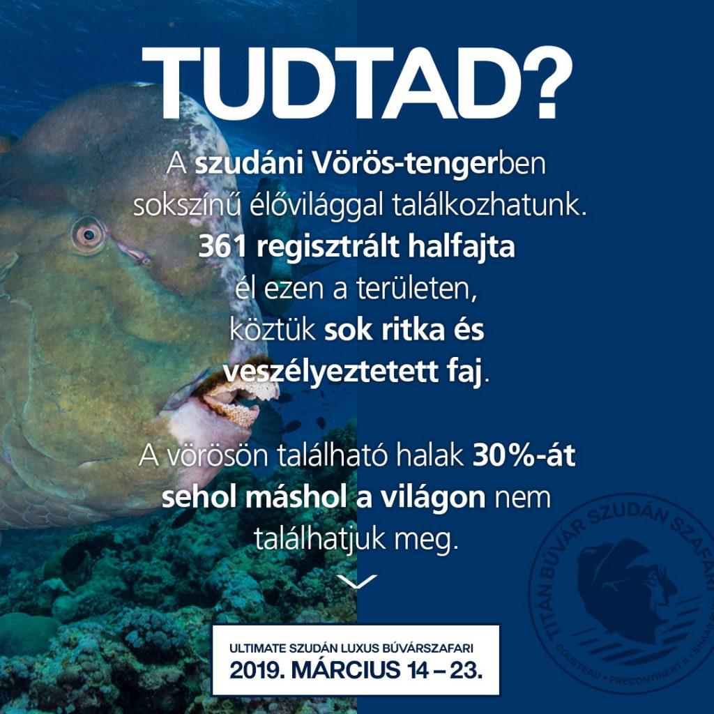 Szudán, búvárszafari, Tudtad, titanbuvar, tudnod kell, búvártúra, búvárkodás, Sudan, vörös-tenger, cápa