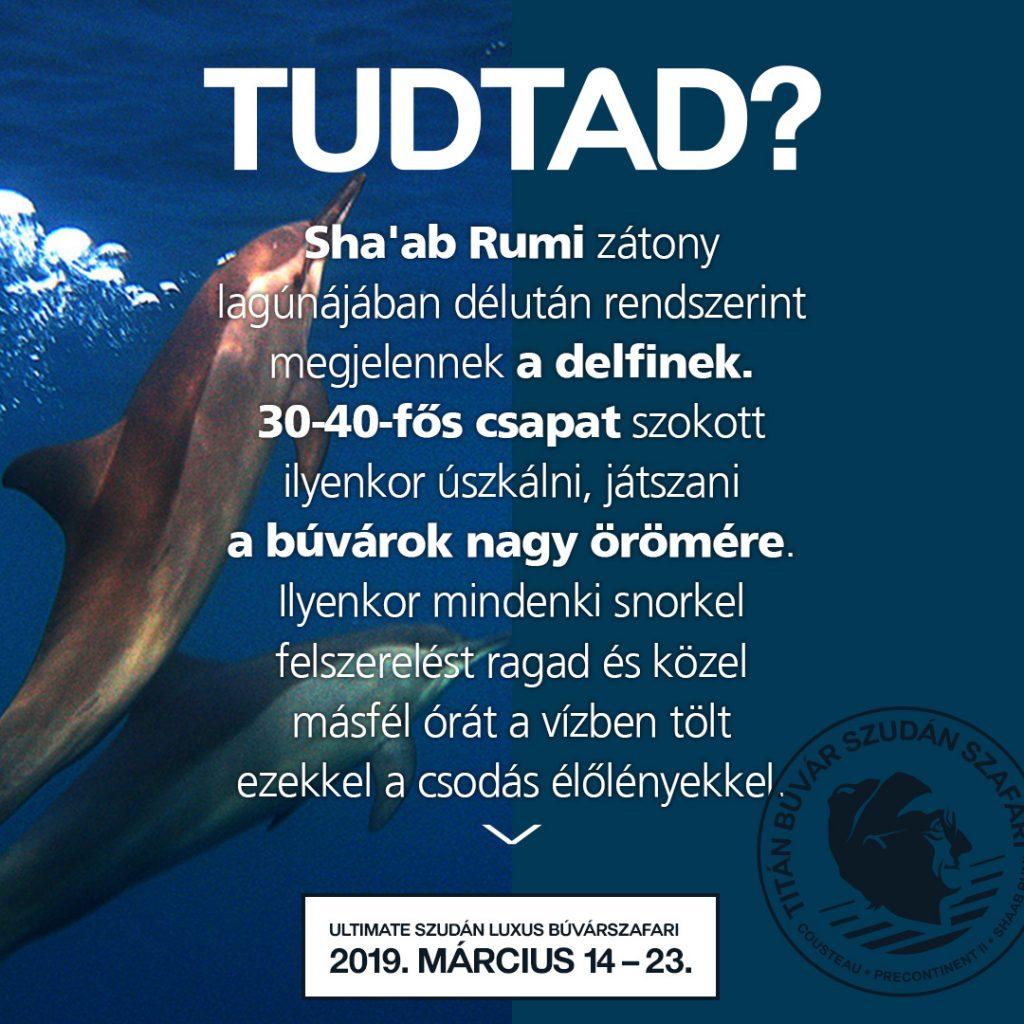 Szudán, búvárszafari, Tudtad, titanbuvar, tudnod kell, búvártúra, búvárkodás, Sudan, vörös-tenger, cápa, delfin
